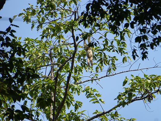 Hanging monkey.