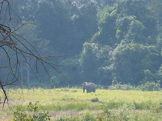 Wild Elephant!
