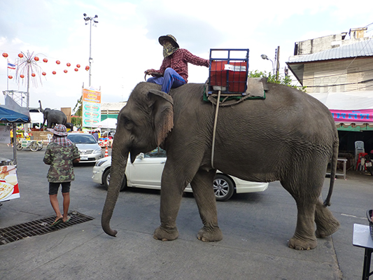 Surin was more famously known for it's Elephant round up. Which has thousands of elephants playing games and such. It was in November so we missed it by a week or so. But we still saw elephants in the town.