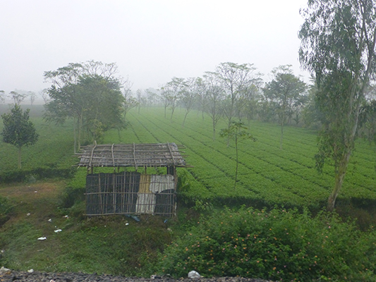 One of the many farms we saw during our ride to Darjeeling.