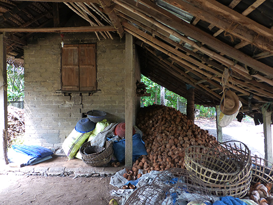 "A coconut processing ""plant"". The use nearly every part of the coconut for some purpose. In the rainy season they use the building to dry out the coconut flesh. In the dry season they dry it in the sun."