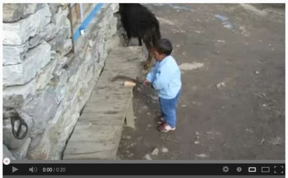 Click on the image to watch a video of the little guy chopping wood.