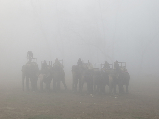 Elephants in the mist.