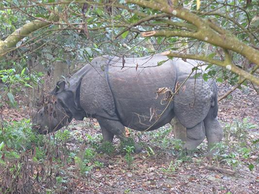 Unaware rhino