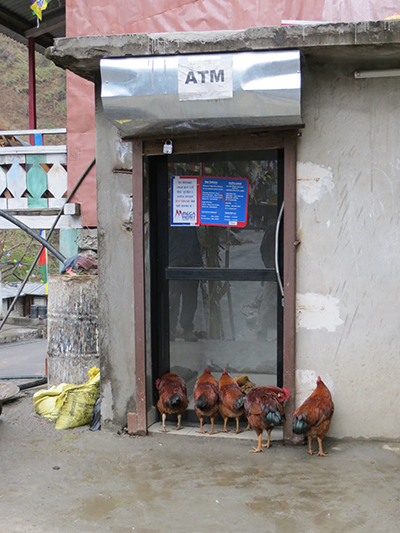 The queue for the ATM in Syafru Bensi. Crazy chickens.
