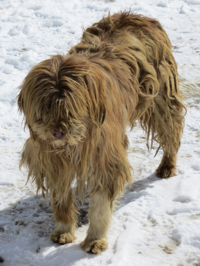 This poor dog had dreads. I'm not sure how he could see either.
