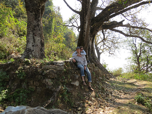 Taking a rest under a bodhi tree.