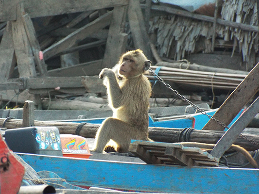 Our neighbors had a monkey chained to their floating house. Not sure why...