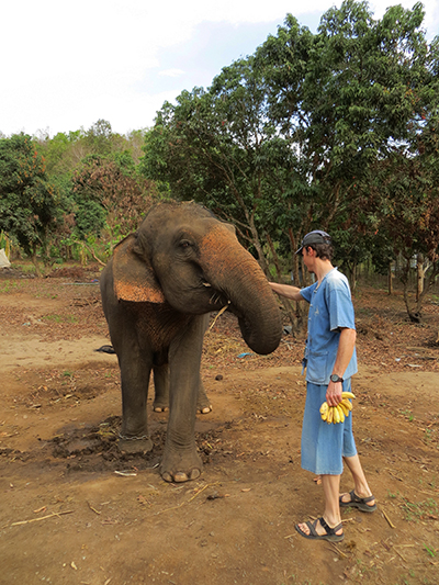 Dave feeding the elephant sugar cane and bananas.